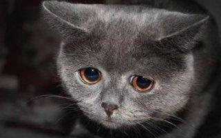 Грустный кот, трудности, жизнь боль